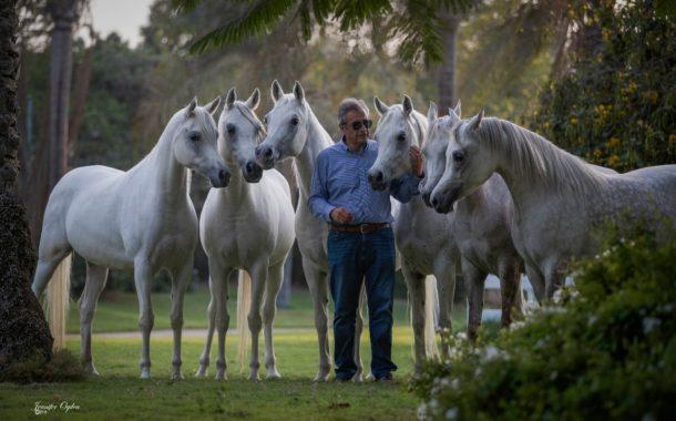 10 شروط يجب توافرها لاصدار تراخيص مزرعة خيول .. تعرف عليها