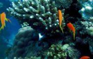 أجمل صور أعماق البحار من الاسماك والشعاب المرجانية