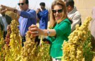 فريق علمي برئاسة نائب وزير الزراعة يتفقد اول تجربة لزراعة