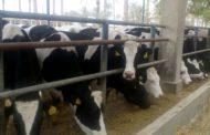 ماذا إستفادت الحكومة من مزادات الإصلاح الزراعي؟