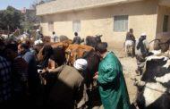 الزراعة: قوافل بيطرية للتوعية بمخاطر الامراض الوبائية في 17 محافظة