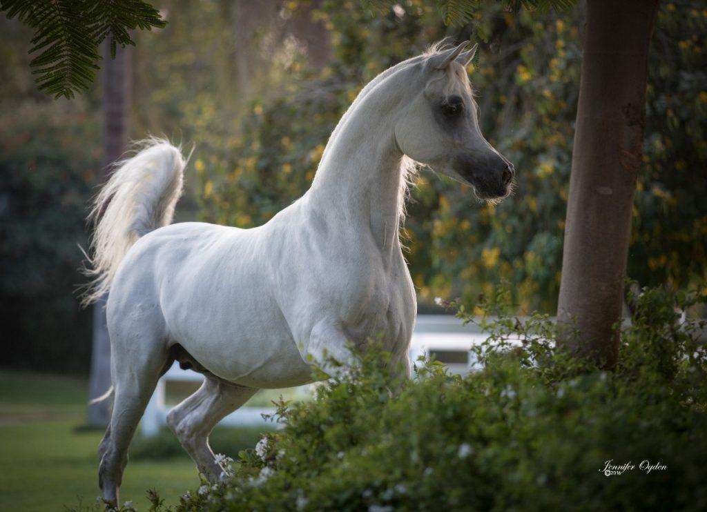 عالم الخيول... الفرق بين الحصان والفرس والمُهر والجحش والفحل