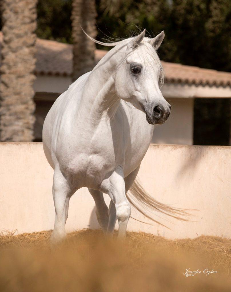 نائب وزير الزراعة للإنتاج الحيواني تطالب بدعم صناعة الخيول العربية
