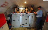 الزراعة تواصل تصدير الخيول العربية إلي الخارج