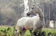 وزير الزراعة: موقع  محطة الزهراء لا يتناسب مع طموحات الدولة في تطوير صناعة الخيول الاصيلة