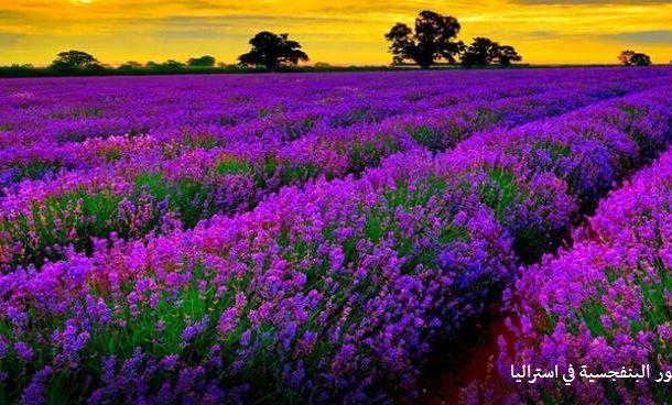 تعرف علي انتاج الزهور في الهند واستراليا و 4 دول أوروبيه