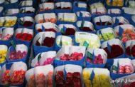 مصر تصدر زهورا بـ35 مليون دولار وإسرائيل 250 مليون دولار