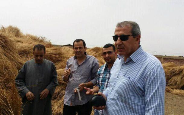 بدء موسم حصاد الكتان... والمساحات تستقر عند 14 ألف فدان للعام الثاني علي التوالي