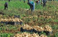 تعرف علي أسباب زيادة الصادرات المصرية من البطاطس