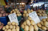 عاجل... رئيس الحجر الزراعي: قواعد الاتحاد الأوروبي تحظر إستيراد تقاوي البطاطس من خارج المنطقة