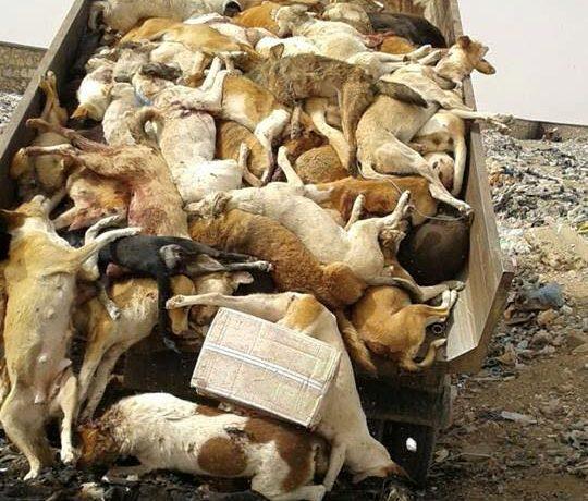 إستعدادا لتقديم بلاغ للنائب العام...الرفق بالحيوان توثق مشاهد العنف ضد الكلاب والحيوانات الضالة