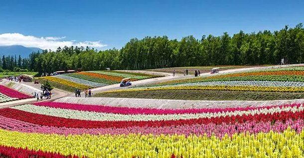 الزهور تحولت من لغة الحب إلي عالم البزنس بأكثر من 20 مليار دولار سنويا (صور)
