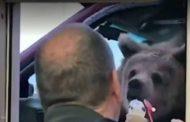 حديقة حيوان كندية تتعرض للتحقيق بسبب