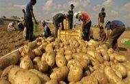 عاجل...الصادراتالزراعية تقفز إلي 4.875 مليون طن خلال 345 يوم