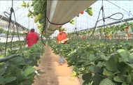 الزراعة: حملات مرور لعرض التوصيات الفنية لمواجهة ارتفاع الحرارة