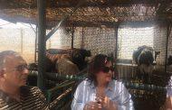 نائب وزير الزراعة : نجاح حملة تحصين الماشية ضد الحمى القلاعية بنسبة 89% لأول مرة