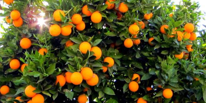تعرف علي خطة الزراعة لتغيير أنظمة الري في مزارع الفاكهة بالدلتا والوادي