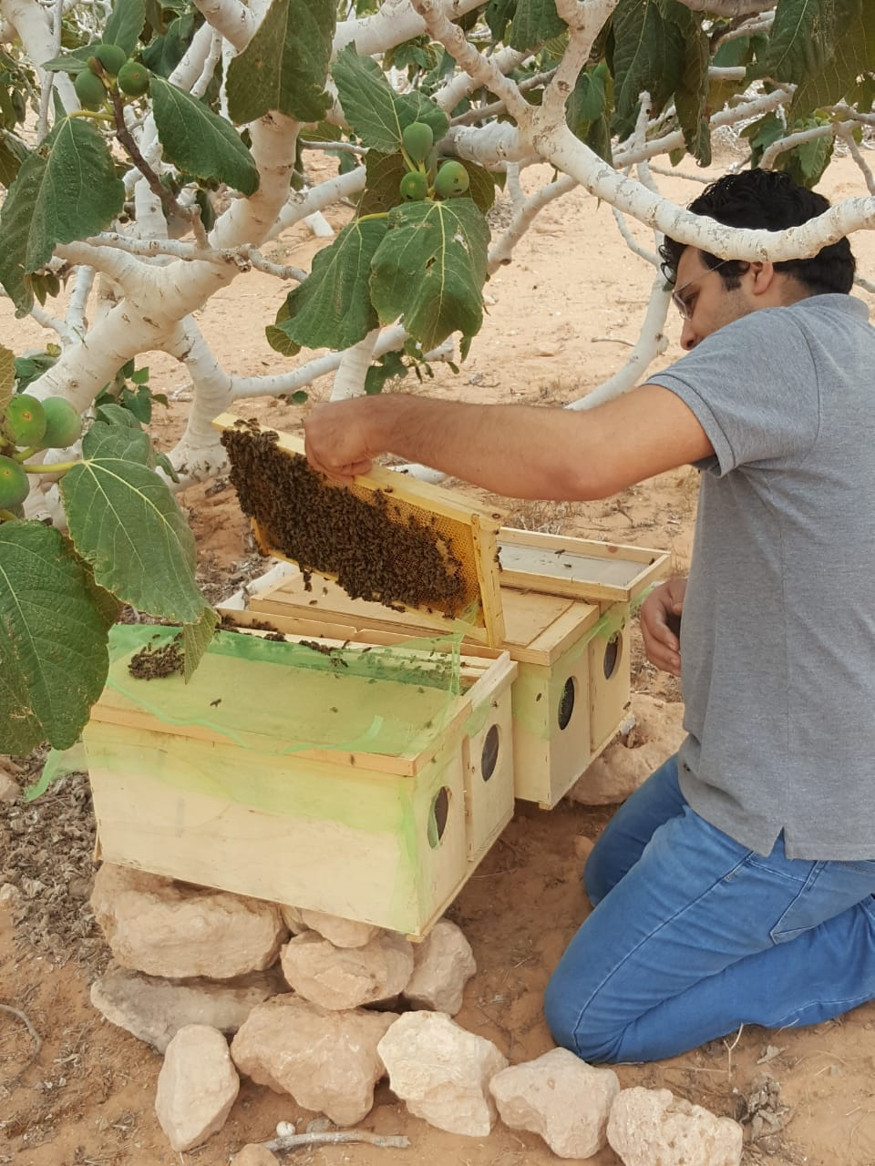 متي يفرح النحل وكيف تكتشف غضبه؟