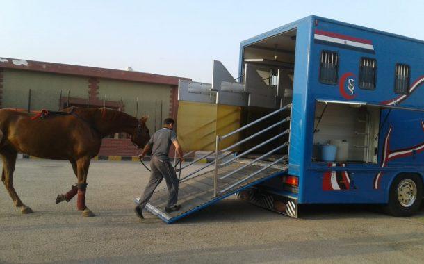 بالصور تصدير 9 خيول عربية جديدة إلى ألمانيا
