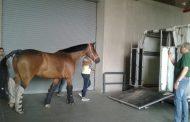 نائب وزير الزراعة : قواعد مصر لتصدير الخيول تحول مصر لأكبر منطقة إستثمار للخيول