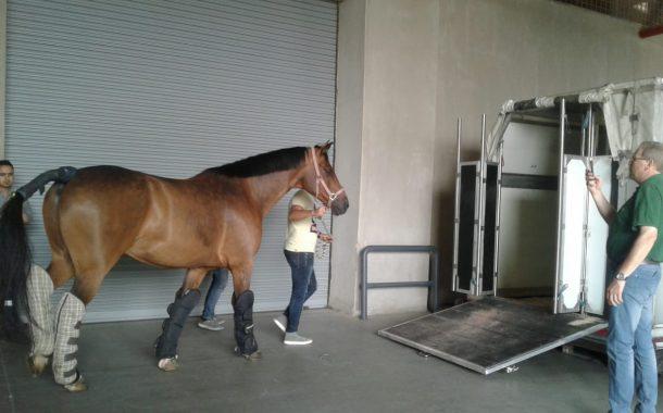 عاجل... بدء إجراءات تصدير 11 حصانا من الخيول المصرية إلي الأردن