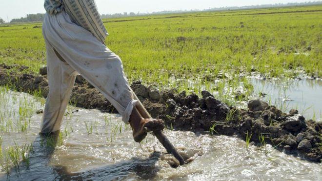 العراق تحظر زراعة الارز والذره لمواجهة أزمة السدود التركية