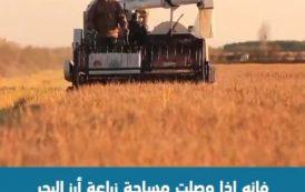 شاهد .. أول تجربة زراعة الأرز بمياه البحر!
