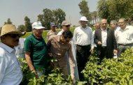 لجنة فنية من الزراعة تتفقد زراعات القطن والذرة والمانجو بالاسماعيلية والشرقية