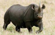 قوات عسكرية بريطانية لحماية وحيد القرن بالدول الافريقية
