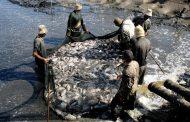 الزراعة : وقف التعديات والتوسع في برامج الإستزراع السمكي أولوية العمل للنهوض بالإنتاج