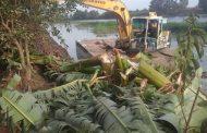 نقيب الزراعيين: قرار وزيري الزراعة والري بحظر زراعات الموز بالاراضي جديدة