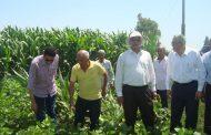 تقرير: زراعة 3.3 مليون فدان بـ10 محاصيل صيفية... ومساحة الذرة تتخطي 2.3 مليون فدان