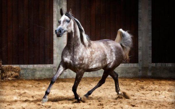 كيف تفهم لغة الخيول من عيونها وحركة أذنيها ؟