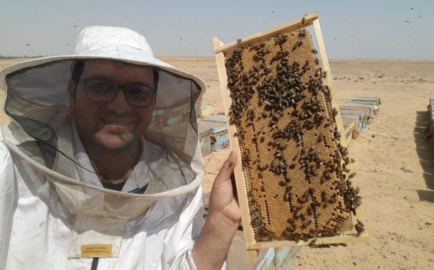 محمد هجرس يكتب: ماذا قدم لنا النحل وما قدمنا له؟ (إنه اليوم العالمي للنحل)