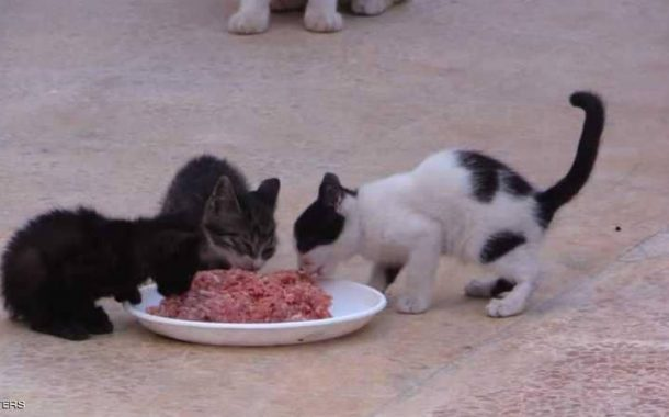 نظرة ...أول محمية لرعاية القطط تأوي إليها 80 قطة