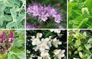 الزراعة تحث المنتجين علي زراعة النباتات الطبية والعطرية 3 مرات سنويا