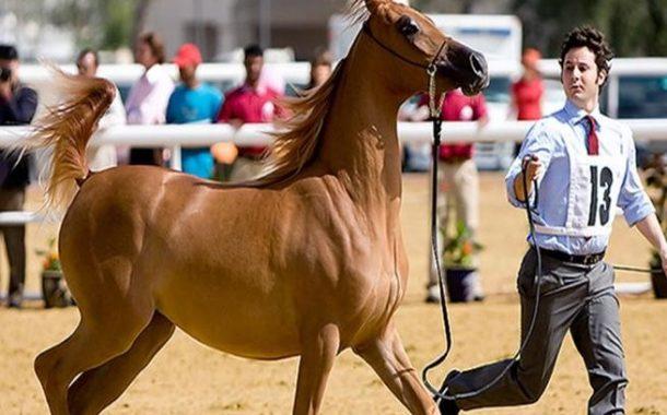ننشر أجمل صور مهرجان لبنان للخيول العربية
