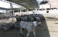 ننشر شروط الحصول علي تمويل من البنوك لتحسين الإنتاج الحيواني بفائدة 5%