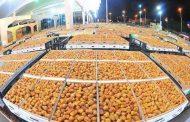 مهرجان سعودي للتمور لتسويق 250 ألف طنا من التمور المحلية