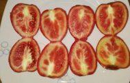الطماطم تطاردها الشائعات والحقيقة أنها