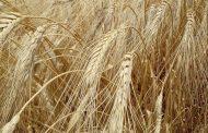 خبير زراعي: كيف نعيد صياغة الامن الغذائي المصري بخطط التوازن في سياسات التحديث؟