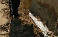 بالصور... الزراعة تواصل مكافحة النمل الأبيض خلال أيام عيد الأضحى المبارك