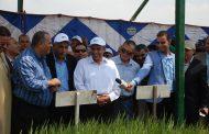 الحكومة تحدد أسعار توريد الأرز وضوابط الإستلام للمحصول