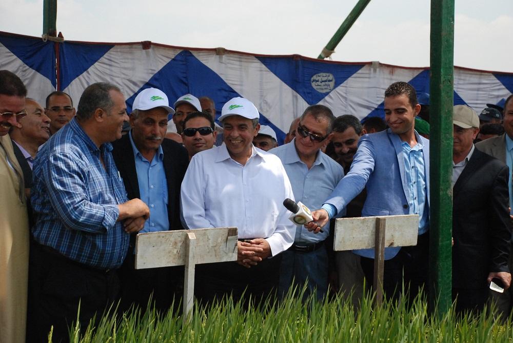 وزير الزراعة : ضوابط زراعة الارز الموسم الجديد تحقق الوفرة في الإنتاج