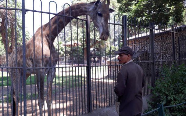 إبتسم... أنت في حديقة حيوان الجيزة في ثوب العيد (صور)