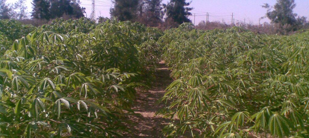 الحكومة تتجه للإعلان عن مشروع جديد لزراعة