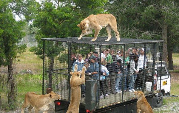 الهند تلجأ لعمل أقفاص لزوار حديقة حيوانات