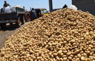 عاجل...بيان هام عن أزمة البطاطس وجهاز حماية المنافسة والممارسات الاحتكارية
