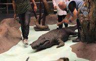 ترميم 1800 من محنطات المتحف الحيواني بحديقة الحيوان (صور)