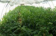 6 توصيات للحفاظ علي الزراعات تحت الصوب الزراعية بعد الطقس السئ